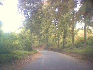 Hutan Tampak Mulai Gundul